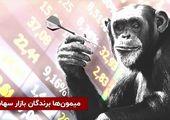 میمونها برندگان بازار سهام