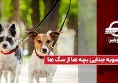 مصوبه جدایی بچه ها از سگ ها