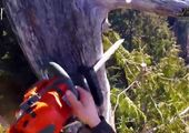 دانش (نا؟!) بنیانی مدیریت جنگلهای شمال