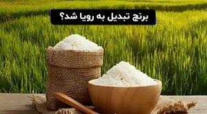 برنج تبدیل به رویا شد؟